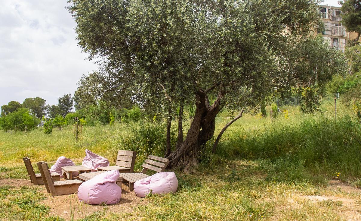 Олений парк в сердце Иерусалима Cervo_park_007.jpg
