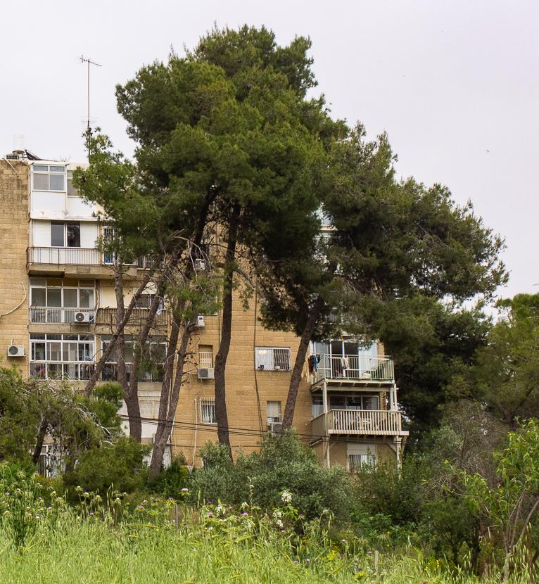 Олений парк в сердце Иерусалима Cervo_park_010.jpg