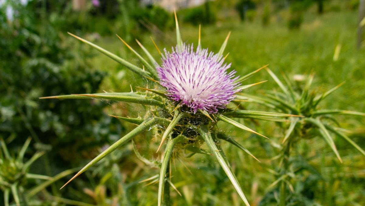 Олений парк в сердце Иерусалима Cervo_park_022.jpg