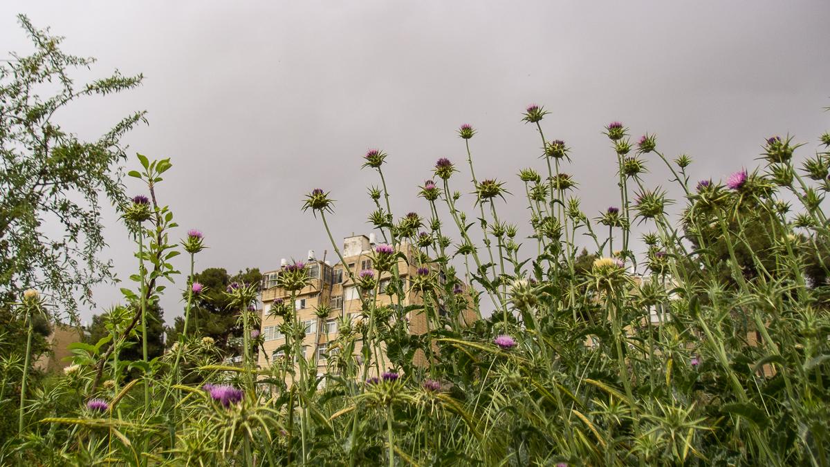 Олений парк в сердце Иерусалима Cervo_park_027.jpg