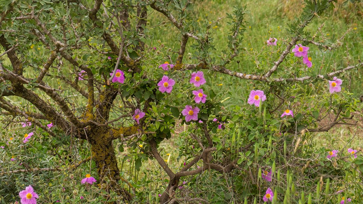 Олений парк в сердце Иерусалима Cervo_park_033.jpg