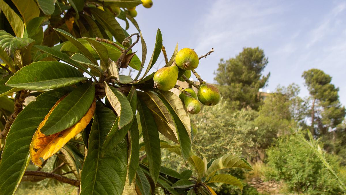 Олений парк в сердце Иерусалима Cervo_park_034.jpg