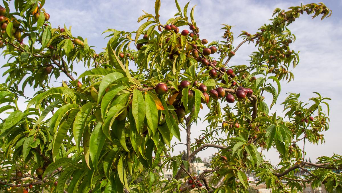 Олений парк в сердце Иерусалима Cervo_park_035.jpg