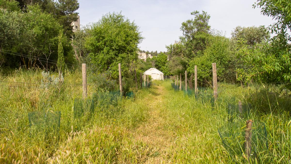 Олений парк в сердце Иерусалима Cervo_park_040.jpg