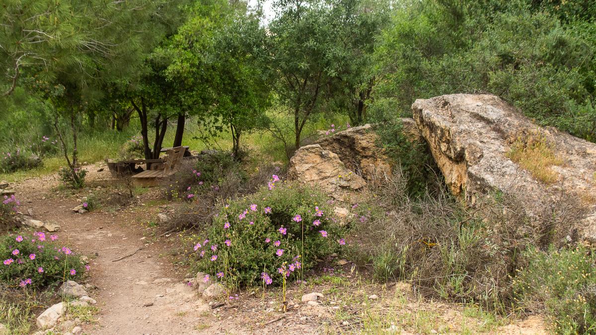 Олений парк в сердце Иерусалима Cervo_park_041.jpg