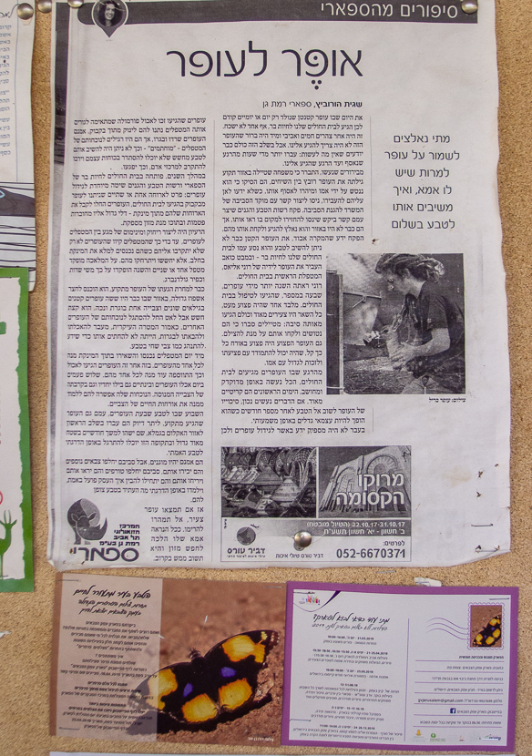 Олений парк в сердце Иерусалима Cervo_park_045.jpg