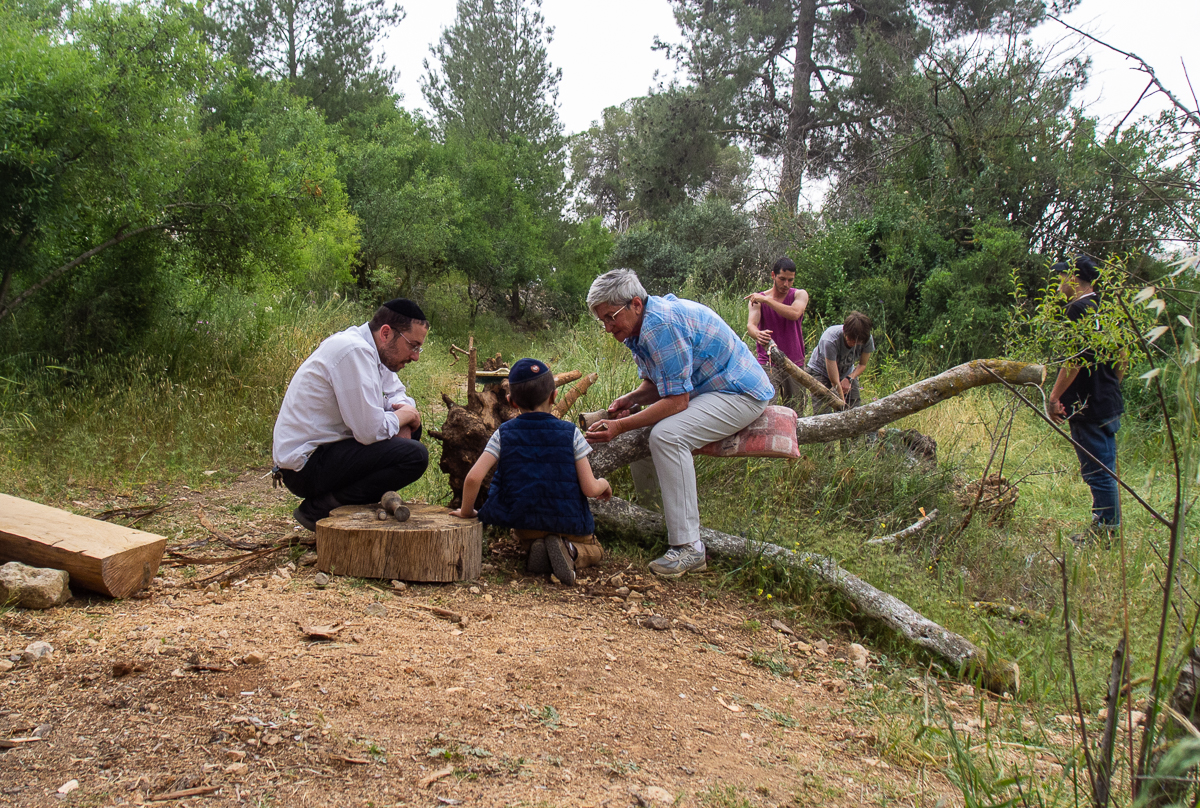 Олений парк в сердце Иерусалима Cervo_park_048.jpg