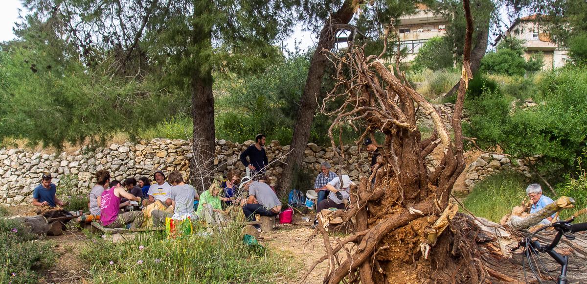 Олений парк в сердце Иерусалима Cervo_park_056.jpg