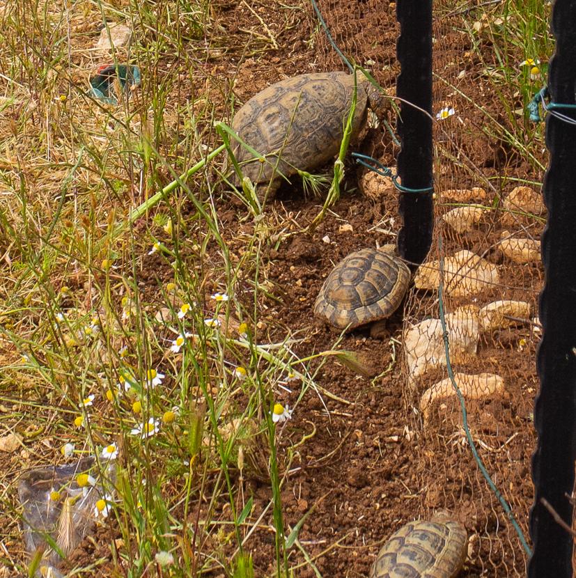 Олений парк в сердце Иерусалима Cervo_park_058.jpg