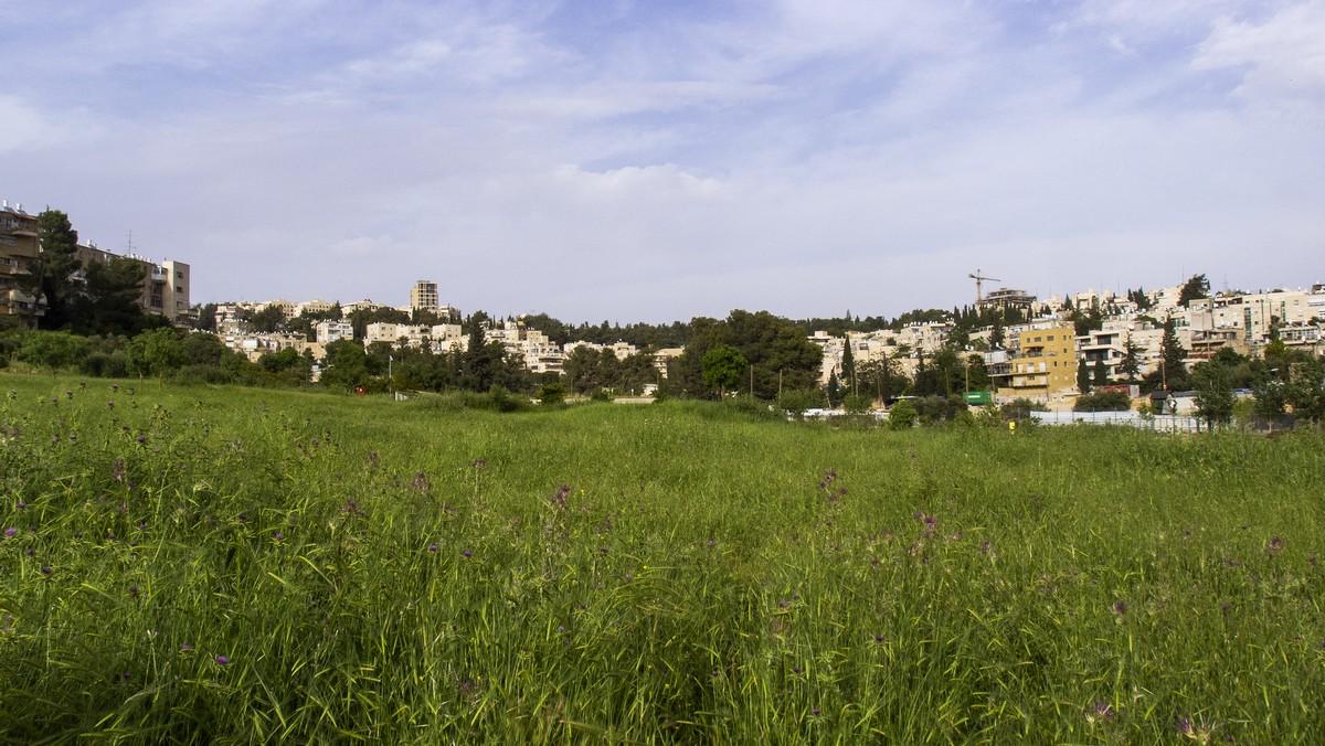 Олений парк в сердце Иерусалима Cervo_park_011.jpg