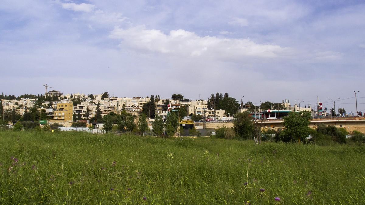 Олений парк в сердце Иерусалима Cervo_park_012.jpg
