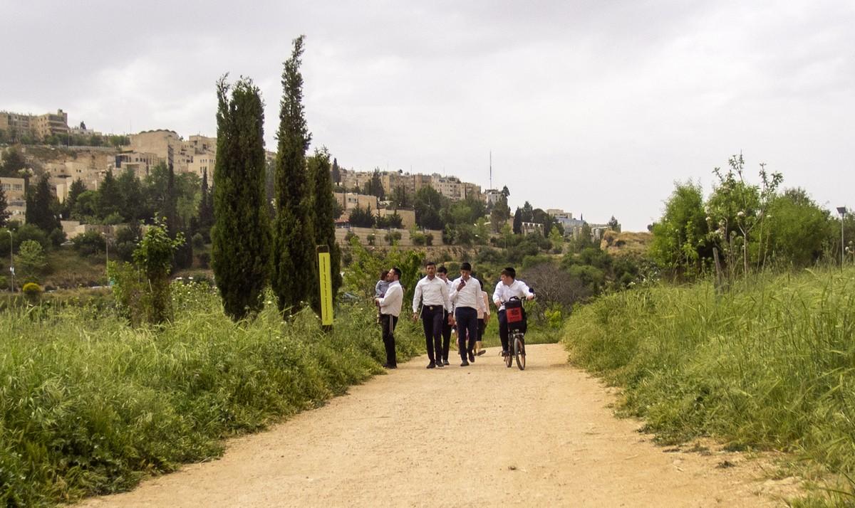 Олений парк в сердце Иерусалима Cervo_park_044.jpg
