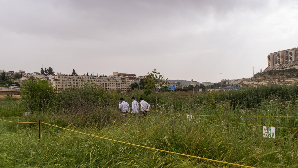 Олений парк в сердце Иерусалима P1011153.jpg