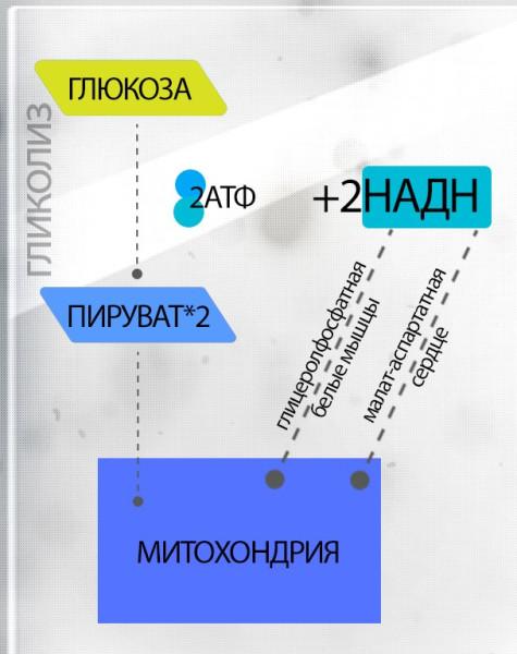chelnochnye_systemy