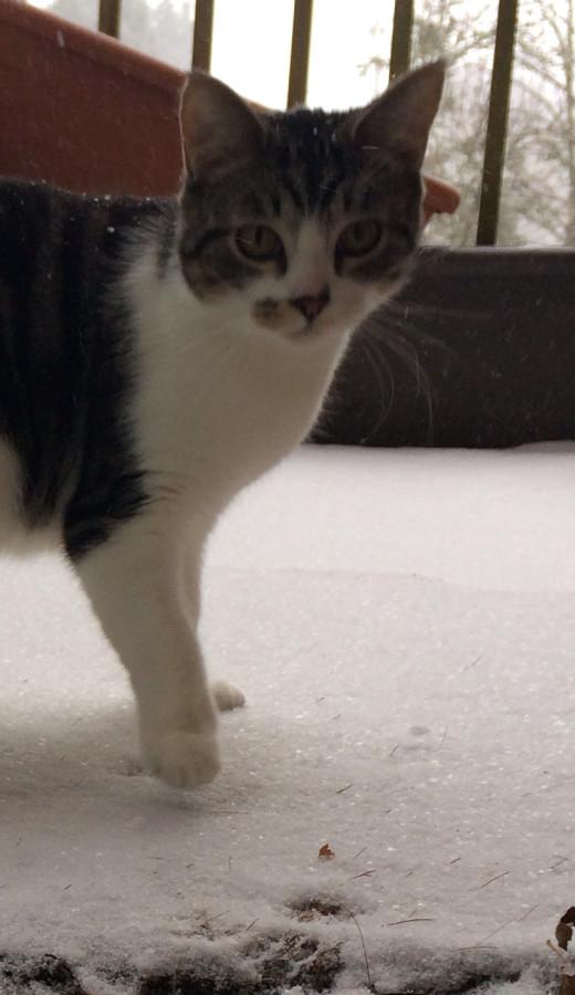 Ripley in Snow