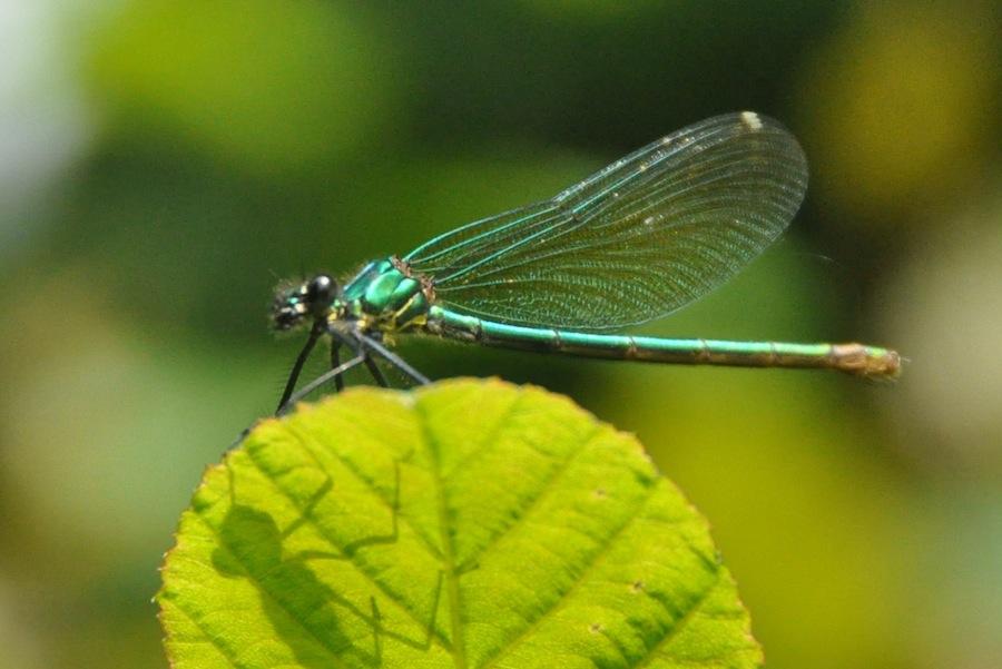 flything