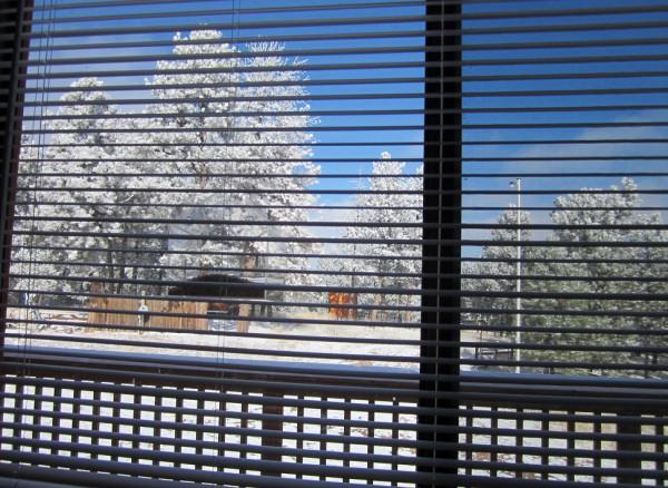 11-11-14 snow day 009
