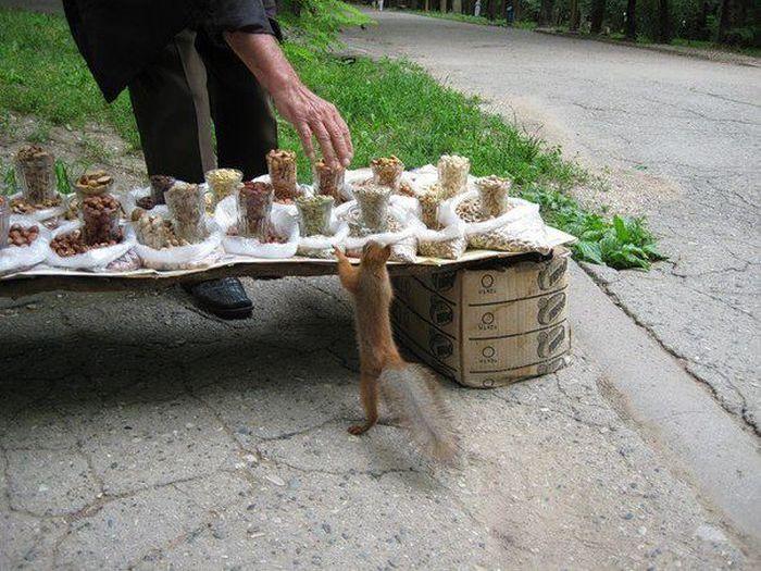 почем орешки