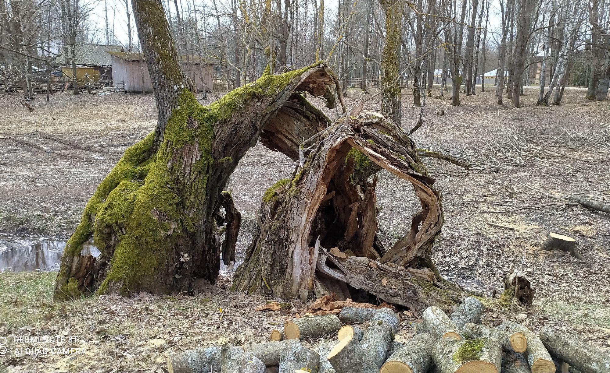 Мистическое дерево.