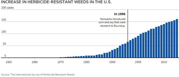 Weeds_growing resistance