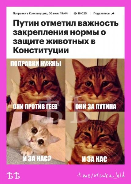 Коты_за_Пукина
