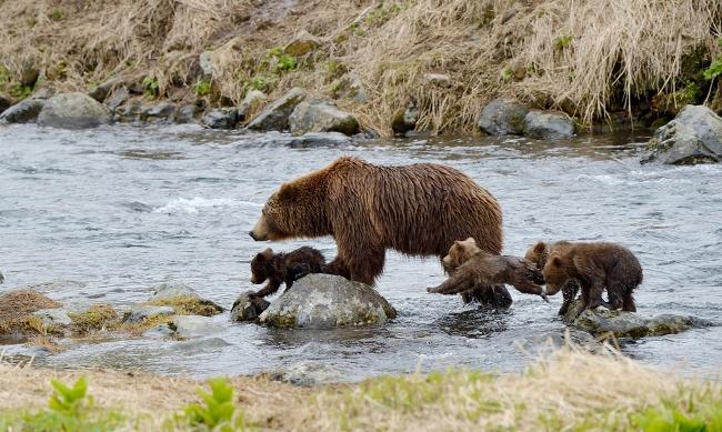 Медведи2