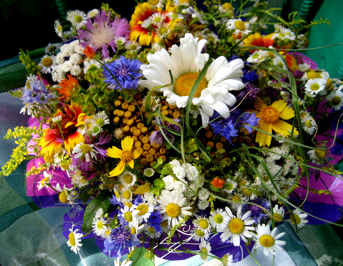 Открытки с днем рождения женщине красивые с полевыми цветами
