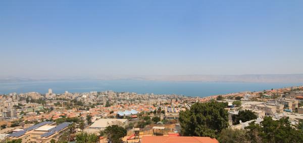 Египетская цапля на Галилейском море