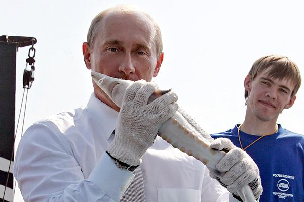 Putin и Osetr