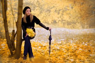 Осеннее поле с деревьями в лучах яркого солнца  обои для