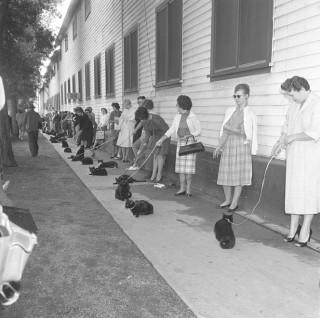Cat Call, 1961