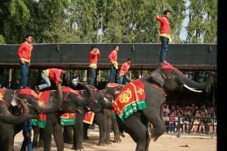 Шоу слонов в Нонг-Нуче