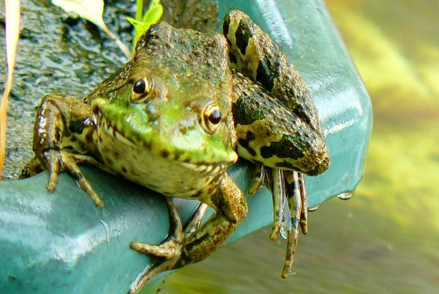 жаба дождь