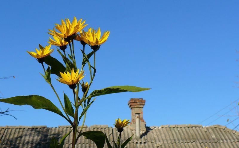 Цветок до неба
