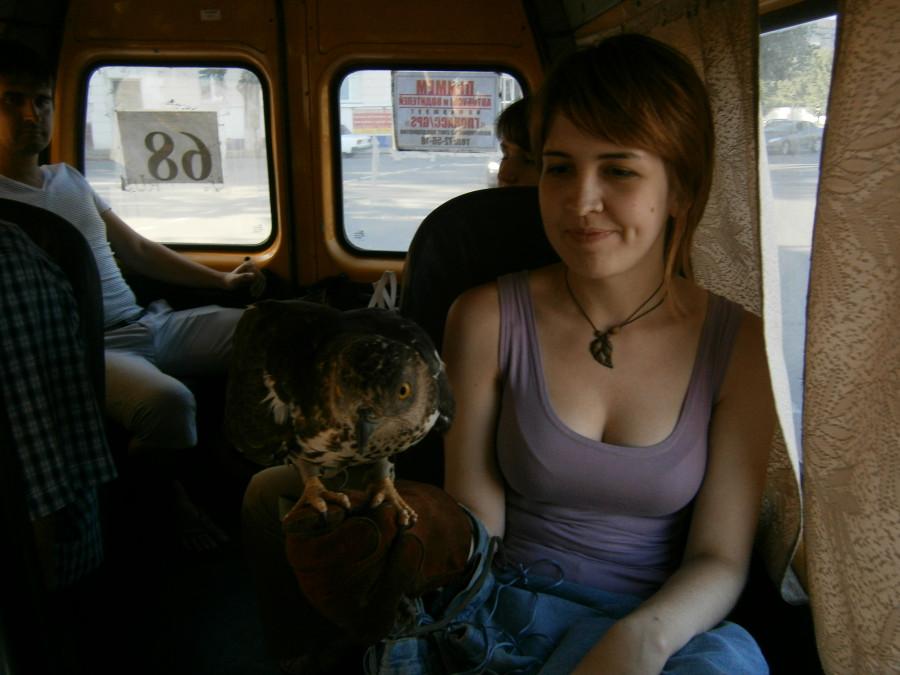 фото в девушек в маршрутке