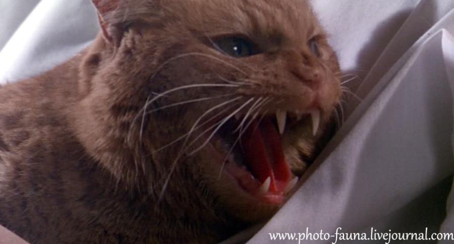 Кот чужой фильм