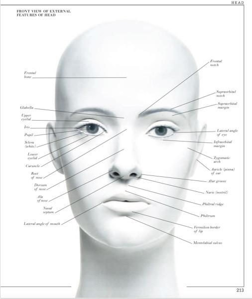 3 HEAD.jpg
