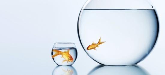 Fish_big_sm