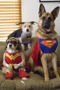 dog_costumes_halloween07_520c