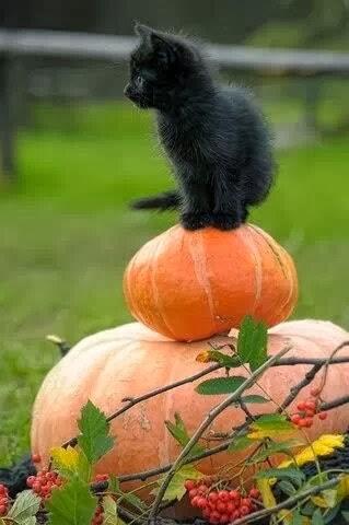 Kitten_Pumpkin