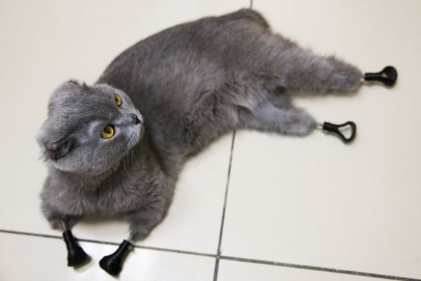 0_Cat-gets-3D-printed-bionic-prosthetic-legs-in-Novosibirsk-Russia.jpg