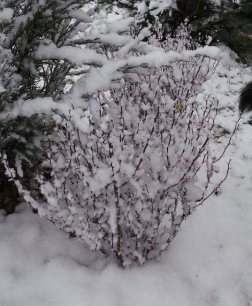 20131126_SNOW 39