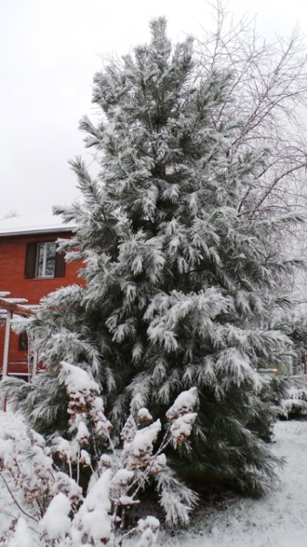 20131126_SNOW 44