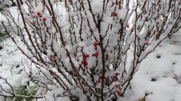 20131126_SNOW 55