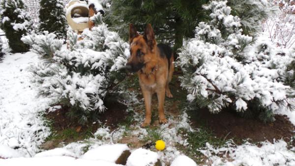 20131126_ SNOW Tyler 00