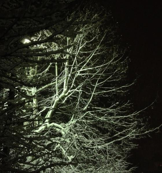 261113 Snow_5196