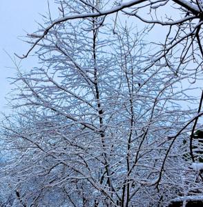 271113 snow_5222