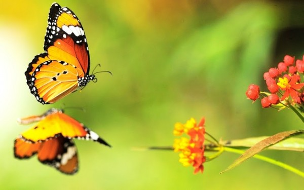 butterfly macro 2560x1600 wallpaper_www.wallpaperhi.com_37