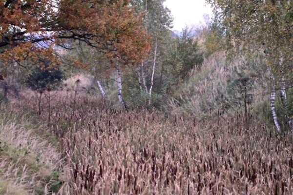 Reeds_4109