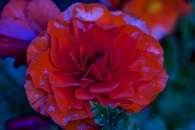 irina_Flowers_Red